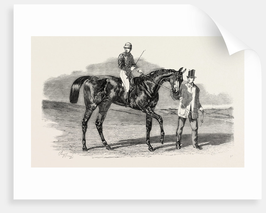 Sweetsauce: The Winner of the Stewards' and the Goodwood Cups, UK by Anonymous