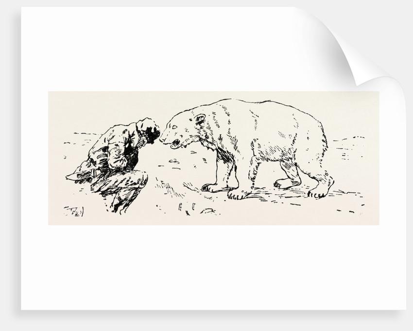 An Encounter with an Polar Bear by Anonymous