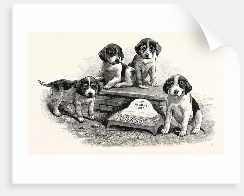 A Water Trough for Dogs to Drink from by Anonymous