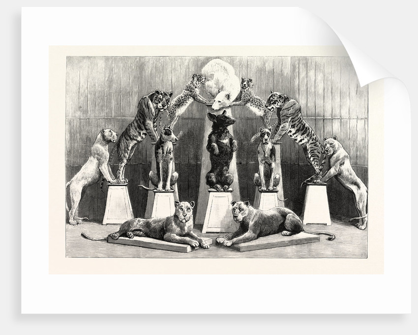 The Happy Family of Performing Wild Beasts at the Crystal Palace the Living Pyramid Formed by Twelve Animals by Anonymous