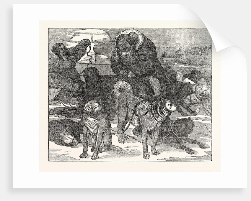 Eskimaux Harnessing Their Dogs to a Sledge by Anonymous
