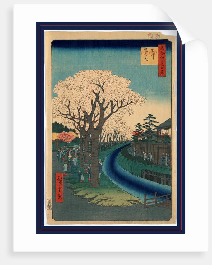 Tamagawa-zutsumi no hana, Blossoms on the Tama River embankment by Ando Hiroshige