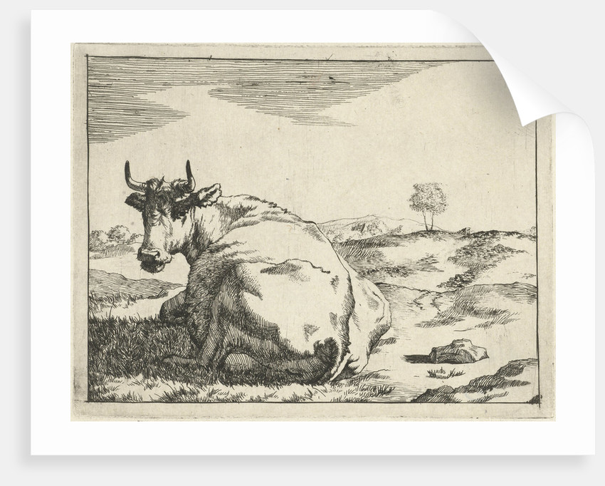 Lying cow by Paulus Potter