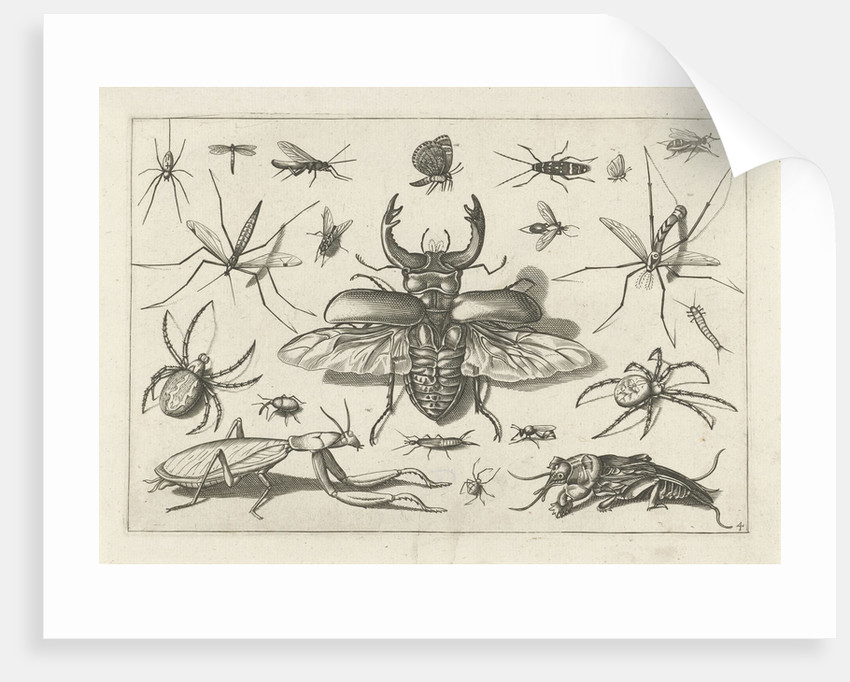 Insects by Claes Jansz. Visscher II