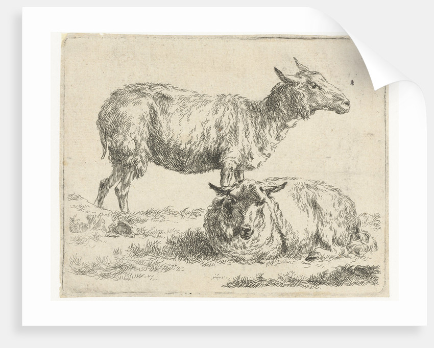 Standing and lying sheep by Nicolaes Pietersz. Berchem