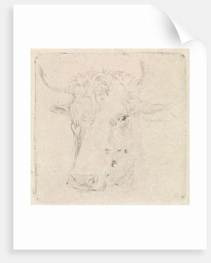 Ox head by Peter Janson