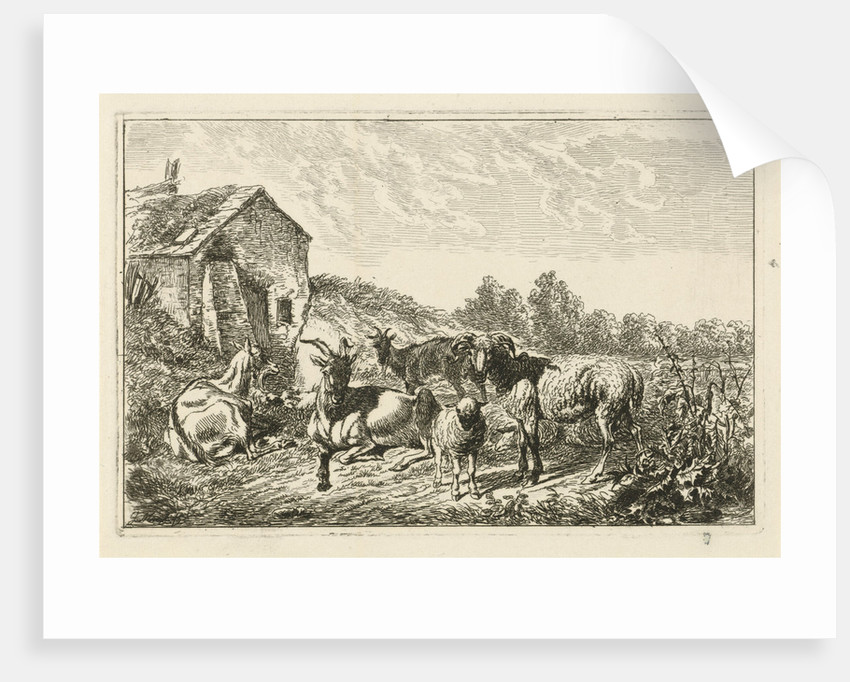 Four goats and sheep at home by Johannes Mock