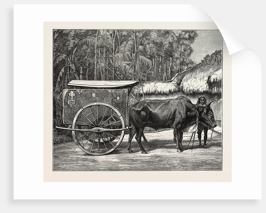 A Bullock Carriage in Cochin-China. by Anonymous