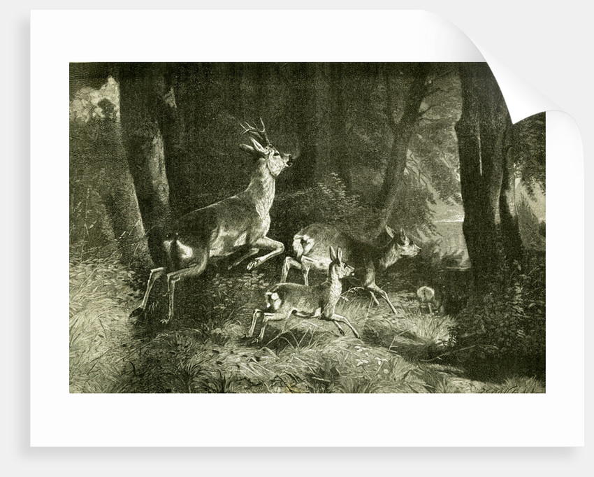Deer Austria 1891 by Anonymous