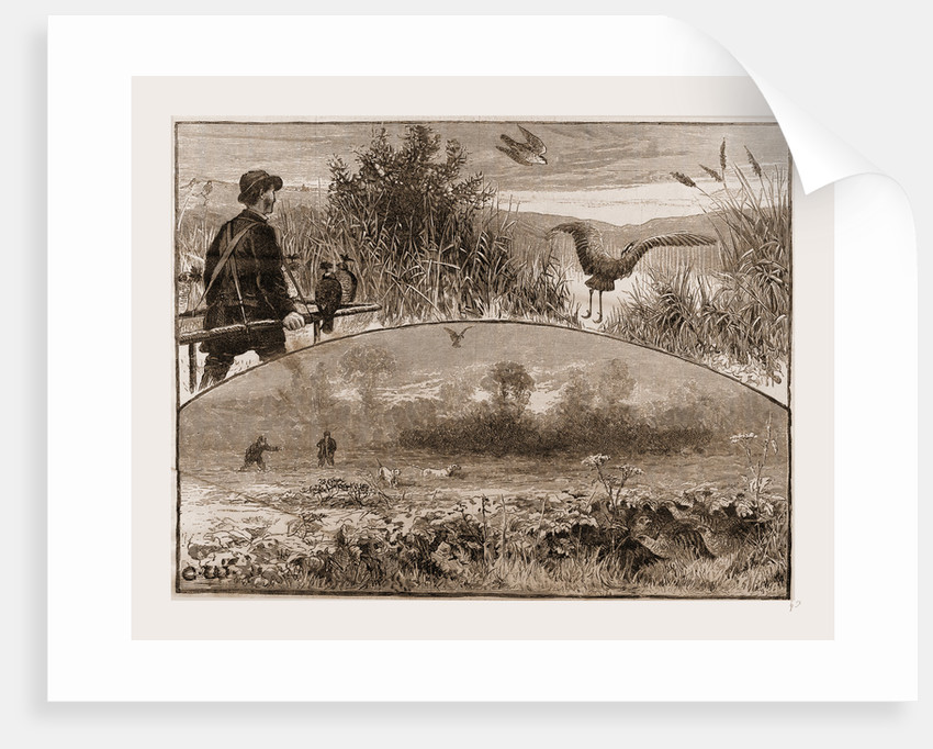 The Revival of Falconry, 1880 by Anonymous