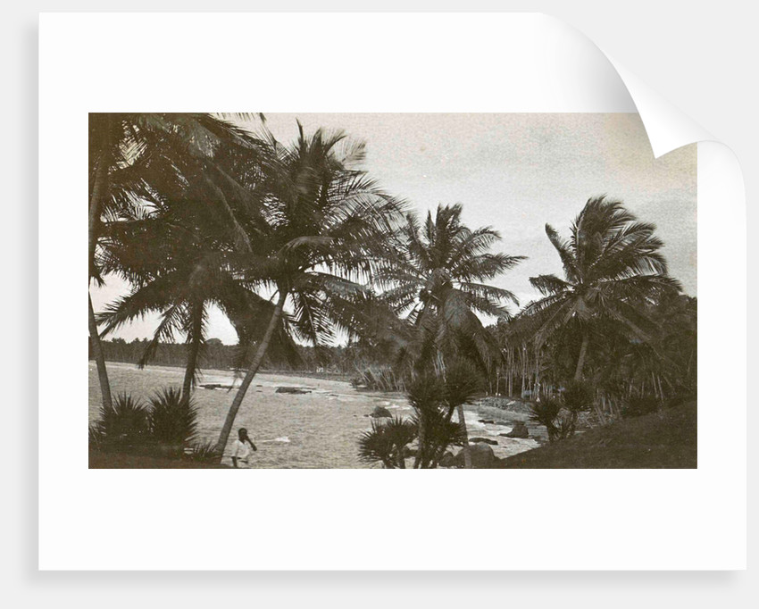 Ceylon, palm beach Mount Levinia in Colombo Sri Lanka by Anonymous