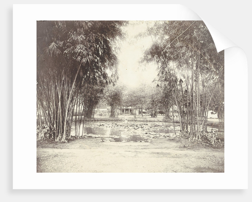 Bamboo Garden and pond with a house by Anonymous