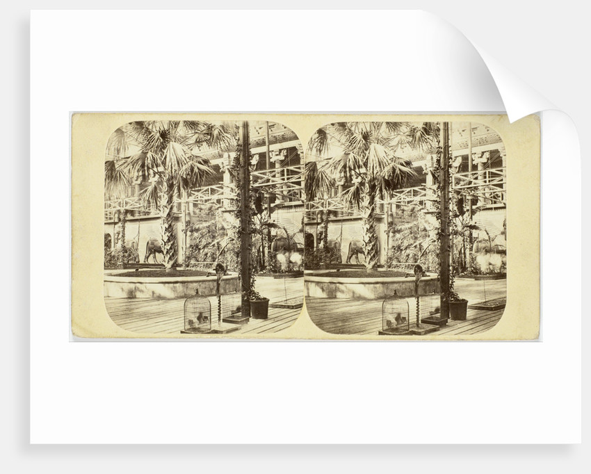 Crystal Palace The Great Palm, and Nineveh Court, Tropical Department by The London Stereoscopic Company