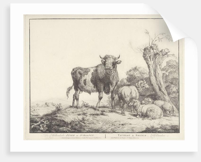 Taurus and sheep by Evert Maaskamp