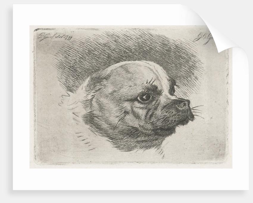 Head of a pug by Pieter Gaal