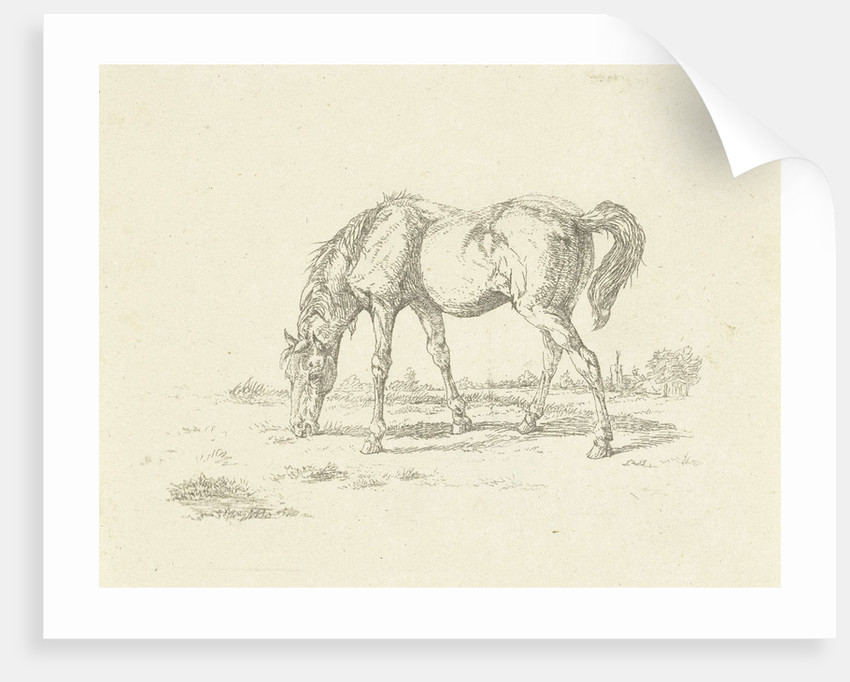 grazing horse right by Jan Dasveldt