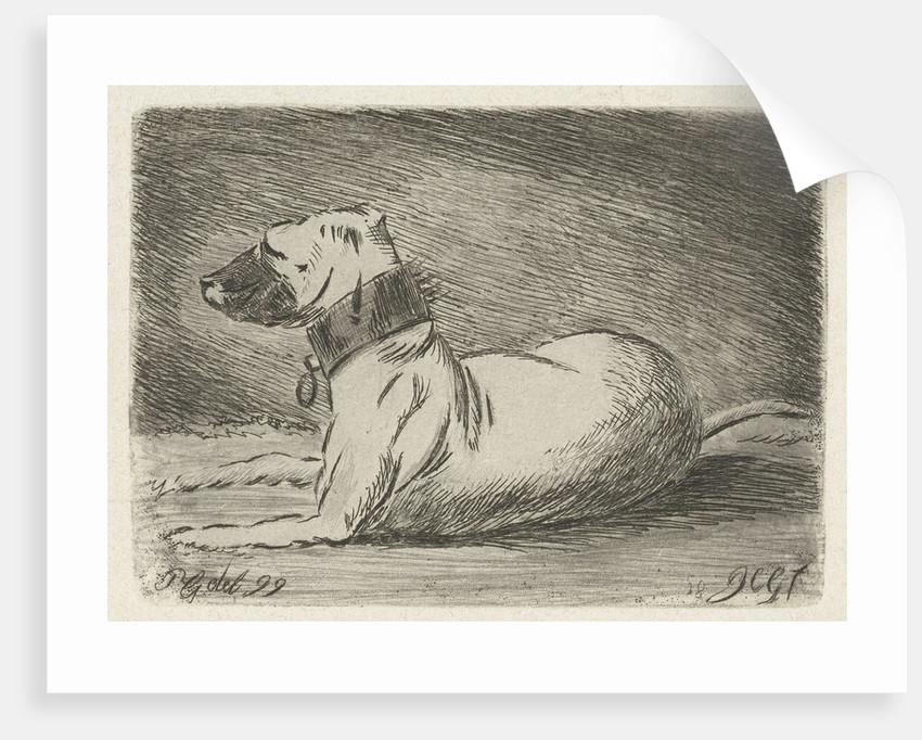 Lying dog with collar by Jacobus Cornelis Gaal