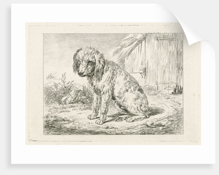 Sitting dog in a barn by Johannes Mock