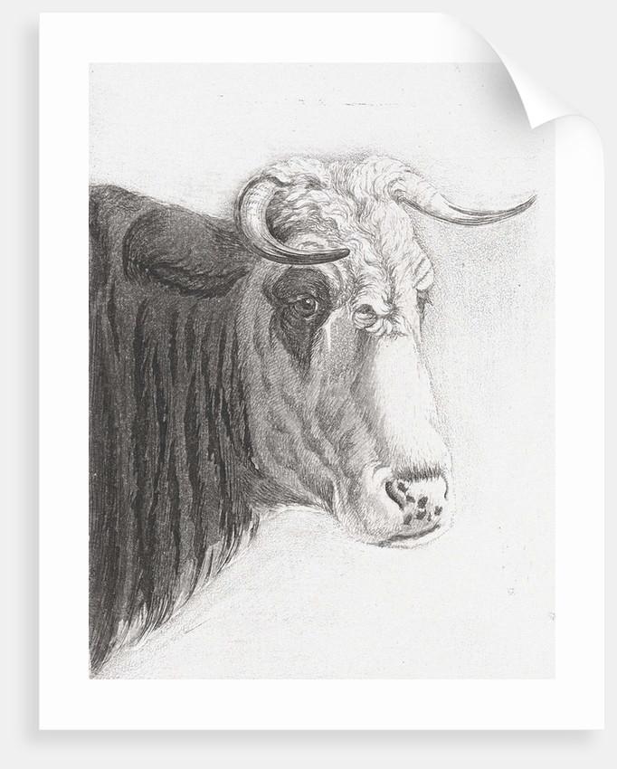 Cows head by Diederik Jan Singendonck
