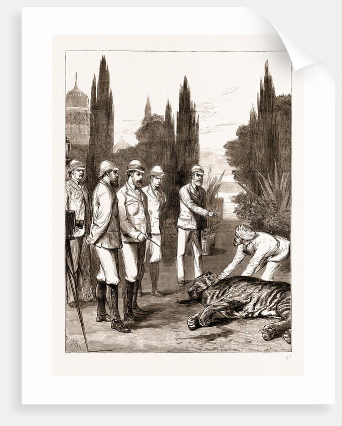 The Prince Of Wales's First Tiger: Jeypore, India by Anonymous
