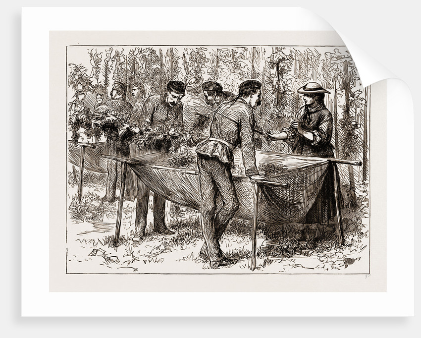 Hop-picking At Aldershot—a Military Flirtation, UK by Anonymous