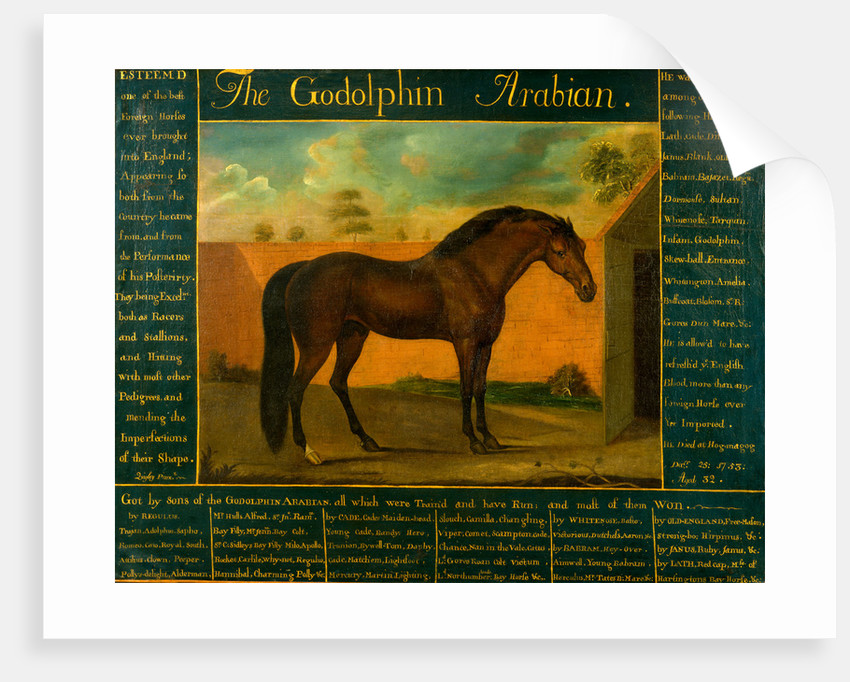 The Godolphin Arabian by Daniel Quigley