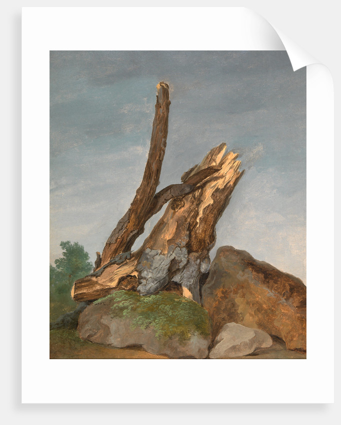 Study of Rocks and Branches by George Augustus Wallis