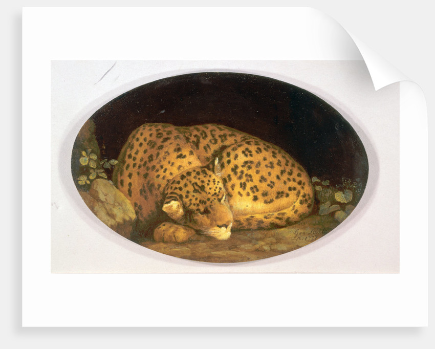 Sleeping Leopard by George Stubbs