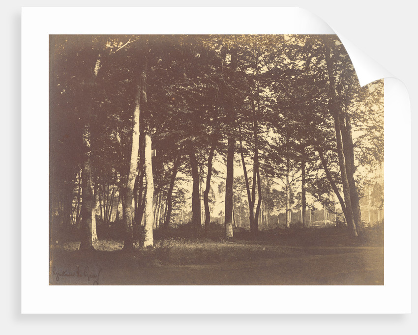 Curtain of Trees by Gustave Le Gray