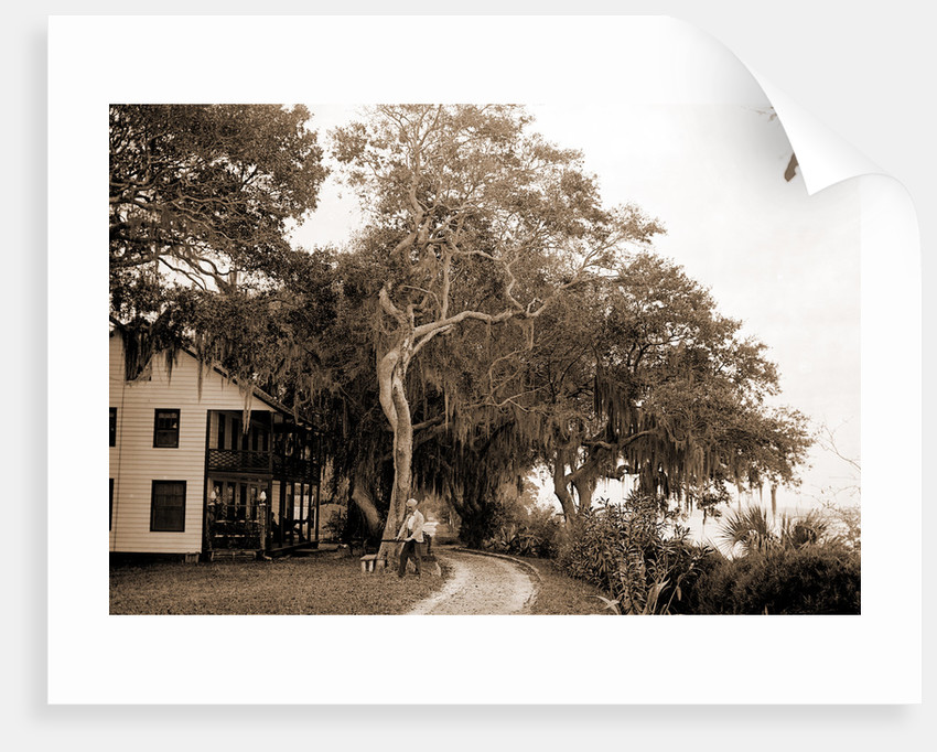 Bostrom's, near Ormond, Jackson, Bostrom's (Ormond Beach, Fla.), Buildings, United States, Florida, Ormond Beach, 1880 by William Henry