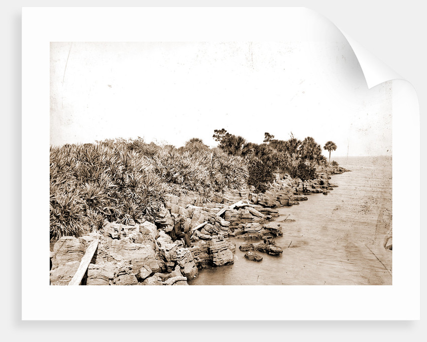 Coquina shore line, Indian River, Jackson, Waterfronts, Bays, United States, Florida, Indian River, United States, Florida, Eau Gallie, 1880 by William Henry