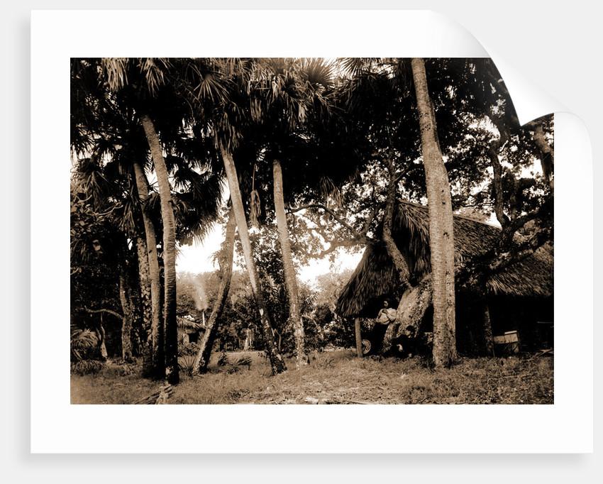 Dawson's, Gem Island, Indian River, Jackson, Trees, Dwellings, Bays, United States, Florida, Indian River, United States, Florida, Gem Island, 1880 by William Henry