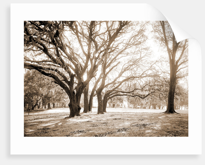 Chicora Park, Charleston by Anonymous