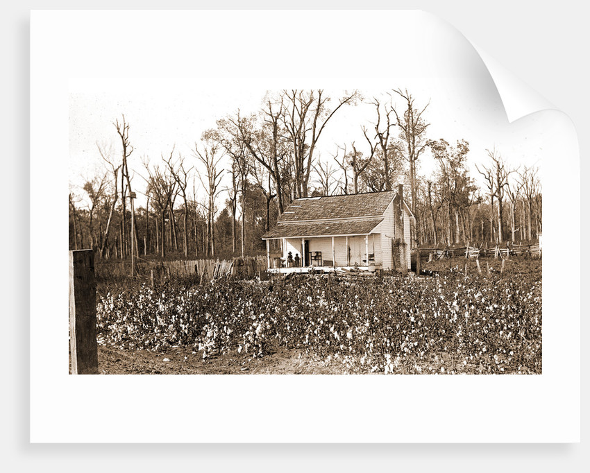 Home of the cotton picker, Jackson by Anonymous