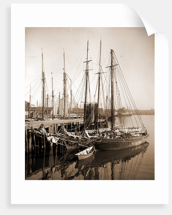 Along the wharves, Gloucester by Anonymous