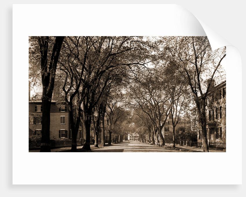 Chestnut St, Salem by Anonymous