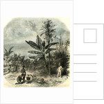 Guadeloupe France 1851 by Anonymous