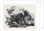Elephant Belonging to the Rajah of Bhurtpore by Anonymous