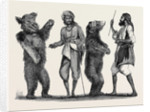 Dancing Bears in India from a Drawing by W. Carpenter by Anonymous