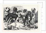 Prize Dogs in the National Dog Show at Islington London UK 1869 by Anonymous