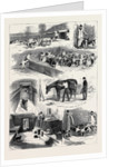 The Royal Buckhounds: The Kennels at Ascot 1880 by Anonymous