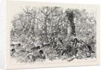 The Ashantee War: Advancing on Coomassie 1874 by Anonymous