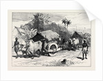 The Famine in Bengal: Bullock Hackeries for Carrying Grain 1874 by Anonymous