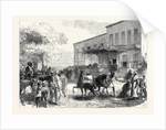 The Abyssinian Expedition: Transport Officers Buying Mules Opposite Shepheard's Hotel Cairo Egypt 1867 by Anonymous