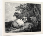 Sheep, in the International Exhibition 1862 by Anonymous