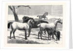 Prize Horses at the Horse Show in the Agricultural Hall Islington UK 1866 by Anonymous