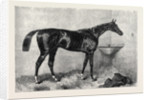 Mr. R. Sutton's Lord Lyon Winner of the Two Thousand Guinea Stakes at Newmarket UK 1866 by Anonymous