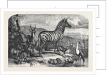 Group of Animals Lately Received at the Gardens of the Zoological Society Regent's Park by Anonymous