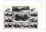 Exhibition of Poultry at the Jardin D'Acclimatation Paris 1868 by Anonymous