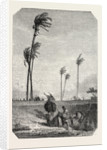 Harvest Dates in Egypt, Engraving 1855 by Anonymous